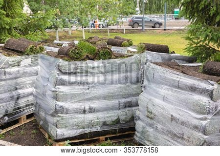 Stacks Of Sod Rolls For New Lawn. Lawn Grass In Rolls On Pallets Against Of Street. Rolled Grass Rea