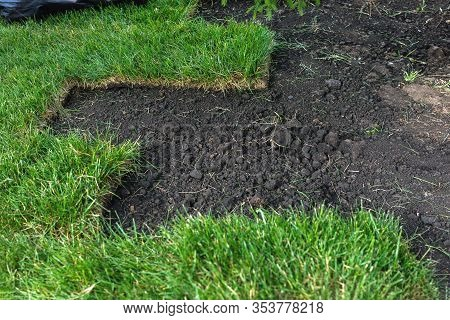 Landscaping, Laying New Sod In A Park Or Backyard