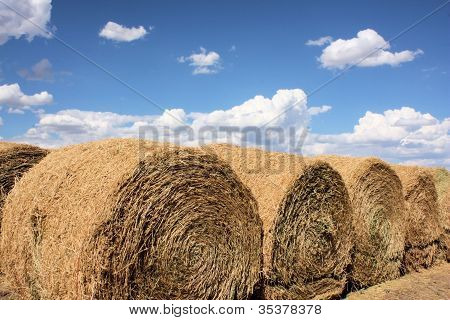 Large Rolls Of Hay