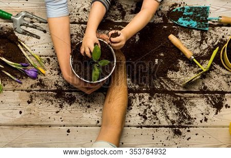 Family Spring Mood. New Plants Life. Nature, Family. Family Plants A Plant. Hands Of Wife, Husband A