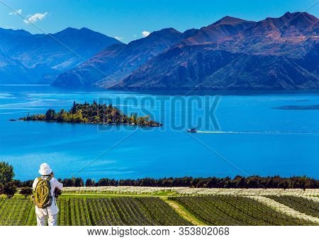 Adorable little island in the Lake Wanaka. Greeting postcard. Picturesque vineyard descends down to the water. New Zealand, South Island. The concept of ecological and photo tourism