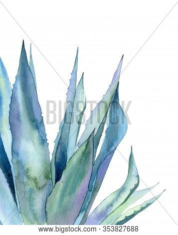 Agave Leaves. Watercolour Illustration Isolated On White Background. Minimalist Plant Part.