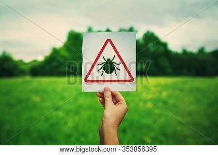Hand Holding A Warning Sign For Ticks Parasite Danger Over The Park Green Lawn Background. Different