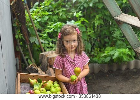 Cute Girl Picking Pears On Farm In Autumn. Little Girl Playing In Pears Tree Orchard. Healthy Nutrit