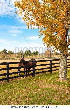 Horses At Horse Farm. Autumn Country Landscape.