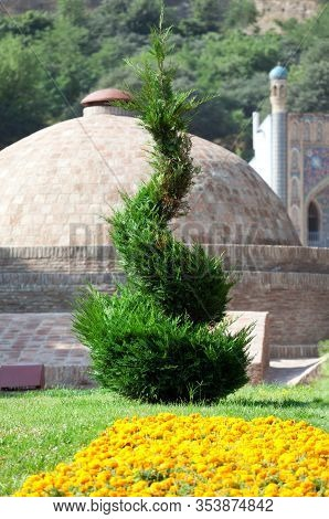 Square With Flowerbed And Artistically Trimmed Thuja Tree In A Spiral Shape. Tbilisi Sulfuric Baths