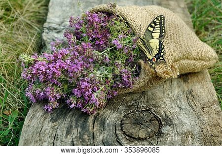 Thyme In A Bag On A Wooden Background. Traditional Medicinal Herbs. Bright Swallowtail Butterfly On