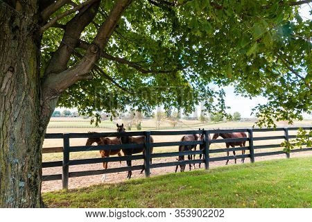 Horses At Horsefarm. Country Landscape. Kentucky, Usa.