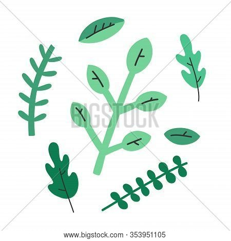 Cooking Herbs, Abstract Doodle Illustration, Isolated Vector Drawing, Culinary Herbs. Flat Cartoon