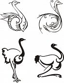 Stylized birds. Set of black and white vector illustrations. poster