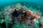 Reef ledge in warm south Florida waters. poster