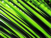 a background photo of green palm leaves poster