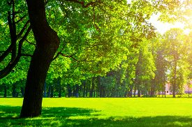 Summer landscape - colorful summer city park with deciduous green sumner trees in sunny weather. Summer park landscape, sunny summer nature view. Summer background with summer park
