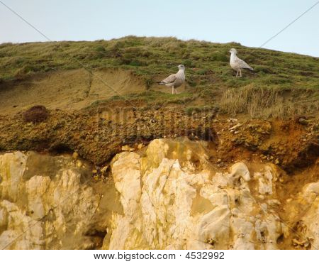 view of seagulls resting on cliffs in sunshine poster