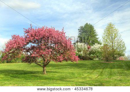 Arboretum In the Spring time
