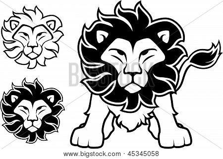 Line Drawing Lion Head : Front view lion images illustrations vectors