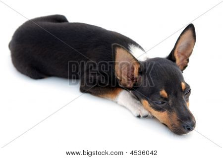 Adorable sleepy dog on a over white background poster