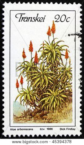 Postage Stamp Transkei, South Africa 1986 Krantz Aloe