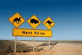 Kangaroo wombat and camel warning sign Australia poster