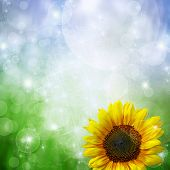Abstract background with sunflower and bokeh lights poster