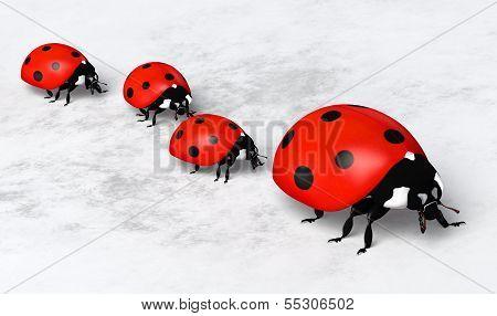 Ladybirds In A Row