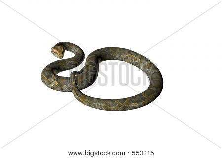 Isolated Snake Five