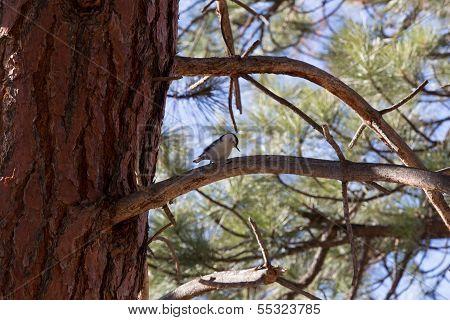 Woodpecker Perch