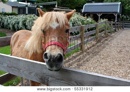 Close up of inquisitive pony standing near old wood fence of petting zoo. poster