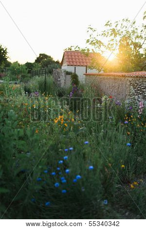 French Garden At Sunset