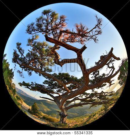 Complete Circular Fisheye View Of The Pine On Top Of The Mountain Sokol