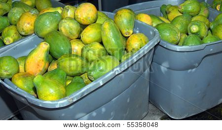 Fresh Picked Papaya