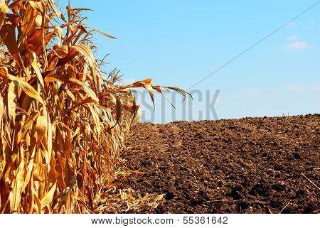 Plantation Prepare