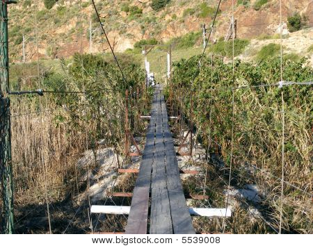 Follow That Bridge