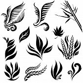 Set of leafs and plants design elements poster