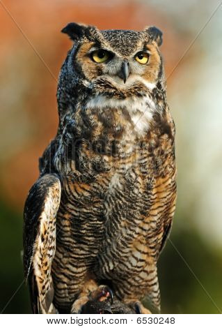 poster of Beautiful portrait of the Great Northern Horned Owl over vibrant autumn background