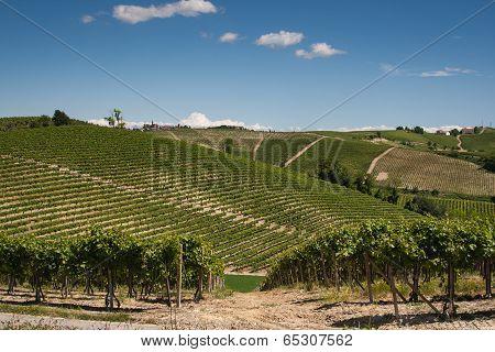 Barbera Hills, Piedmont, Italy