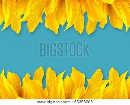 Sun Flower  Petal On Blue Color Background