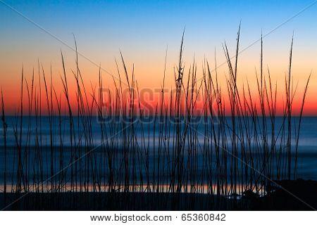 Dune Grass Dawn