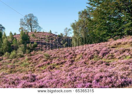Moor and Heathland
