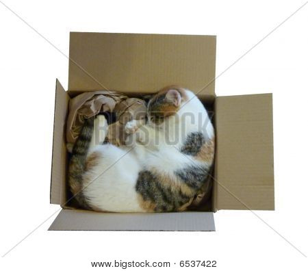 Cat Curled up in Brown Box - isolated on white