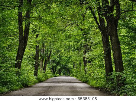 Road in the green forest.