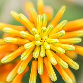 Orange Green Atom Flower Plant Nature Macro poster
