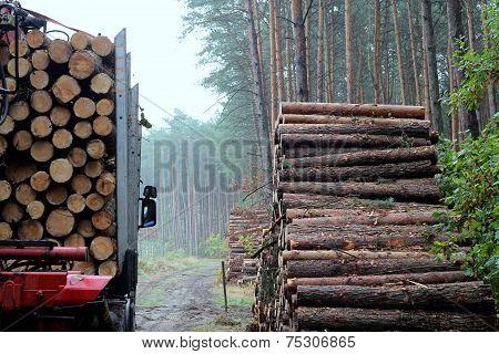 Haulage timber