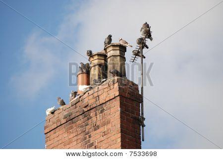 Pigeons on chimney pots