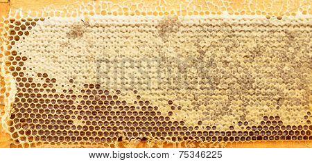 Fresh Honeycomb Gold Color Background