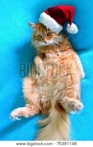 Funny lazy red cat in Santa Claus hat poster