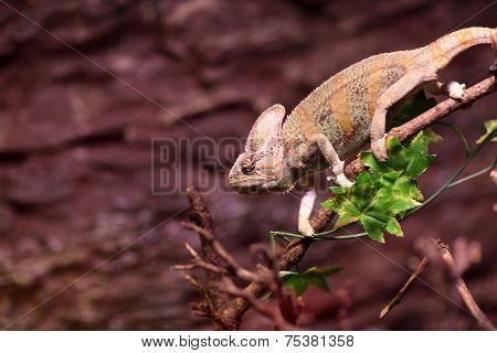 Green Basilisk On A Tree Branch