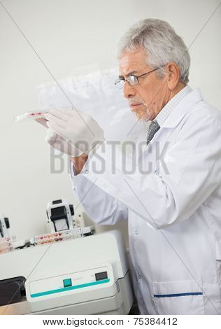 Side view of mature male scientist examining microplate in laboratory