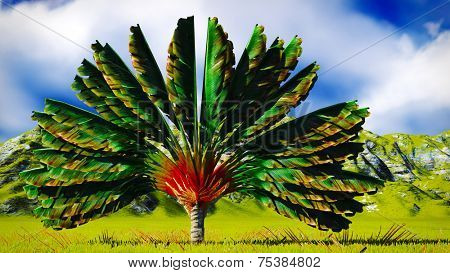 Traveller's tree (ravenala madagascariensis) from Madagascar poster