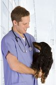 Veterinarian on white holding a black dog. poster